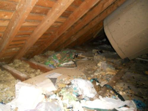 Restaurant Building Survey roof covering