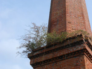 Vegetation growing out of brick joints