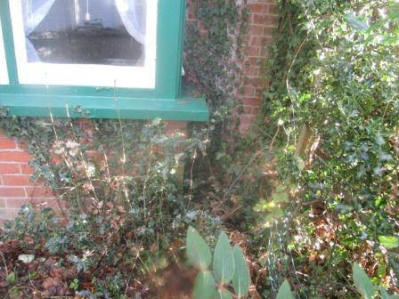 Vegetation growth coming from the gutters