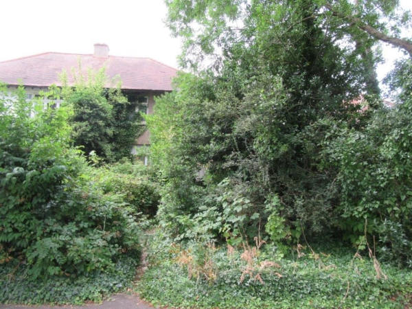 Structural issues in a property with overgrown vegetation